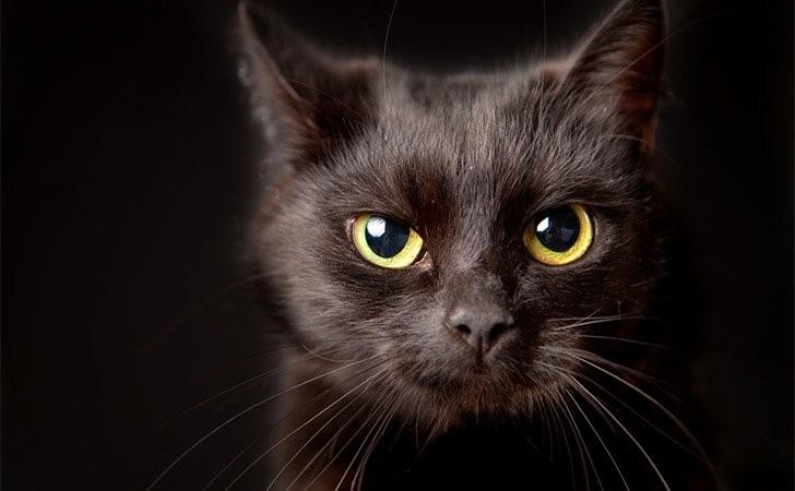 примета кошек