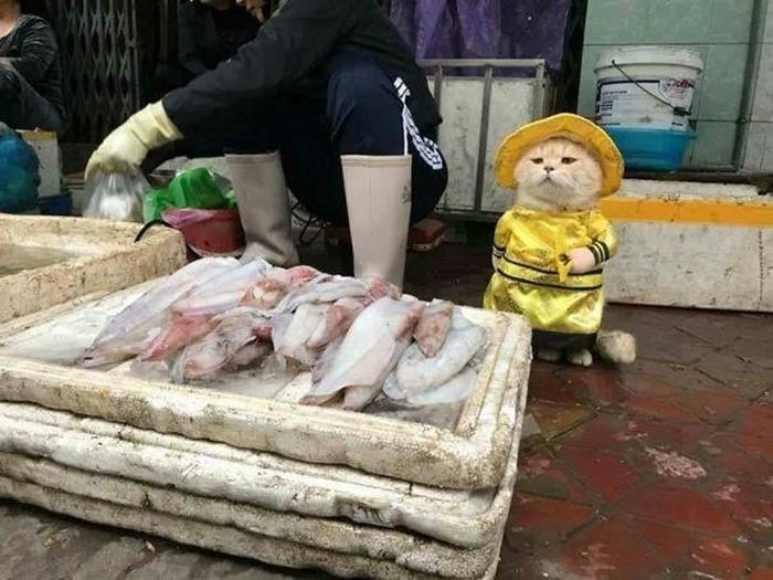 кот продавец